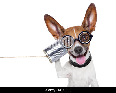 silly ugly dog on the phone with  a can - Stock Photo