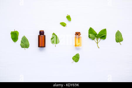 Bottle of essential oil with fresh lemon balm leaves setup with flat lay on white wooden table. Melissa tincture - Stock Photo