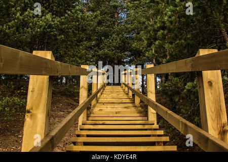 Wooden stairs to pine forest in Ogre Blue hills park, Latvia - Stock Photo