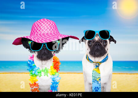 couple of pug dogs in love , relaxing at the beach on summer vacation holidays, ocean shore and sun as background - Stock Photo
