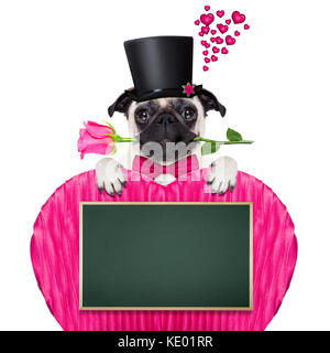 pug   dog looking and staring at you   , with a valentines rose in mouth,holding empty blank blackboard or placard - Stock Photo