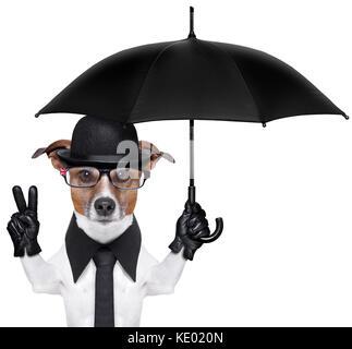 6053c21203887 ... british dog with black bowler hat and black suit holding am umbrella -  Stock Photo