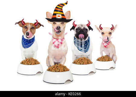 row and group of halloween hungry dogs  in front of food bowls, isolated on white background - Stock Photo