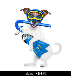 snorkeling scuba diving jack russell dog  with mask and fins ,  isolated on white background - Stock Photo