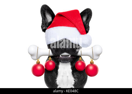 christmas santa claus dog holding a big bone with mouth decoration xmas balls hanging, isolated on white background - Stock Photo