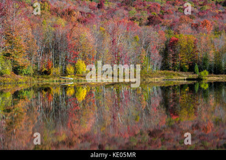 Colorful autumn foliage reflects on the smooth surface of a mountain lake in the Canaan Valley, West Virginia, USA - Stock Photo