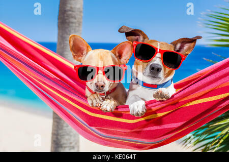 couple of two  dogs relaxing on a fancy red  hammock with sunglasses in summer vacation holidays at the beach under - Stock Photo