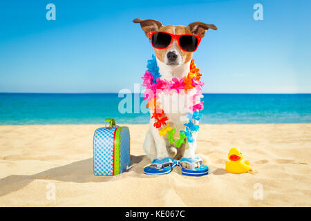 jack russell dog at the beach with a suitcase luggage or bag wearing sunglasses and flower chain at the ocean shore - Stock Photo