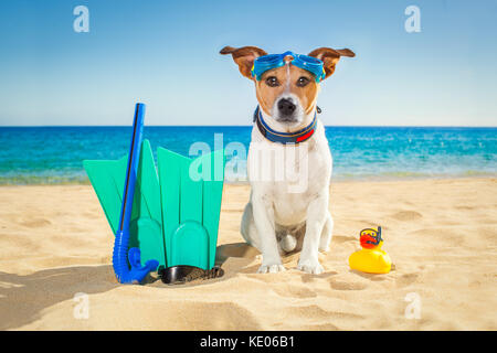 Snorkeling scuba diving jack russell dog  with mask  snorkel at the beach on summer  vacation holidays - Stock Photo