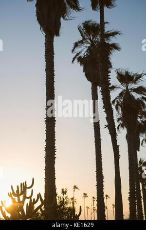 Palm trees in silhouette in Venice Beach, California. - Stock Photo