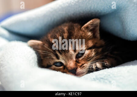 A cute little kitten lying in a blanket at home. - Stock Photo