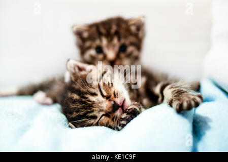 Small cute kittens lying in blanket at home. - Stock Photo