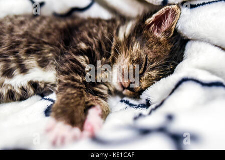 A cute little kitten sleeping in a blanket at home.