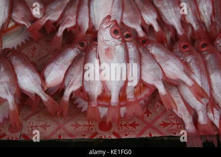 rote Fische zum Verkauf auf einem asiatischen Markt in Borneo - red fish for sale on an asian market - Stock Photo