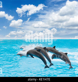 pack of jumping dolphins - Stock Photo