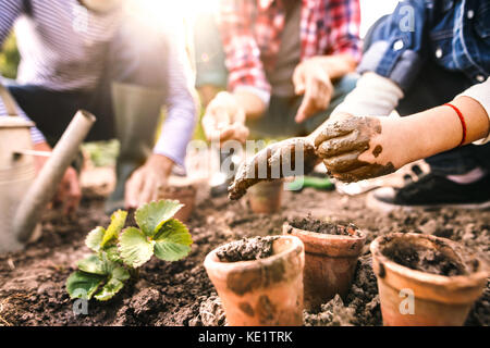 Unrecognizable senior couple with their grandaughter planting a seedling on allotment. Man, woman and a small girl - Stock Photo