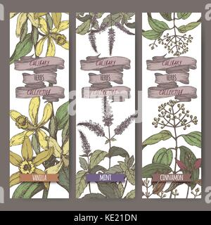Set of three color vector banners with mint, vanilla, cinnamon sketch. Culinary herbs collection. - Stock Photo