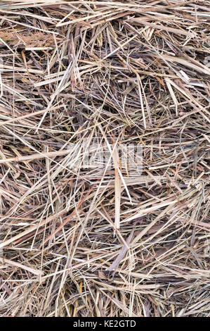 dry beige hay or straw texture, background. - Stock Photo