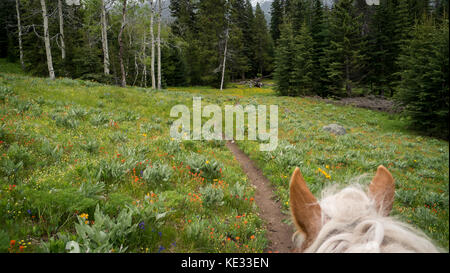 Horse ears perspective on a trail ride through alpine meadow in bloom -  South Chilcotin Mountain Park, BC, Canada - Stock Photo