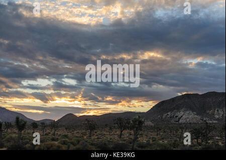 Sunrise over Joshua Tree National Park - Stock Photo