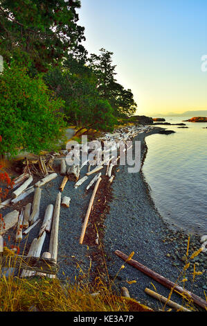 A curved shore line with piles of driftwood at Pipers Lagoon park at Nanaimo Vancouver Island British Columbia, - Stock Photo