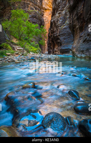 The Narrows in Zion National Park, (near Springdale, Utah) is a section of canyon on the North Fork of the Virgin - Stock Photo