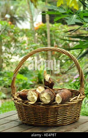 Cassava broken stock photo 24771834 alamy freshly harvested cassava townsville queensland australia stock photo negle Gallery