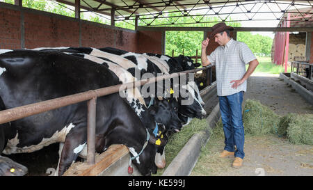 Farmer standing in front of cows at dairy farm. Portrait of a man on livestock farm. - Stock Photo