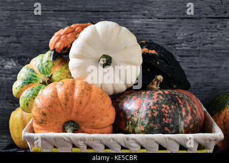 closeup of a basket with an assortment of different pumpkins against a gray rustic wooden background - Stock Photo
