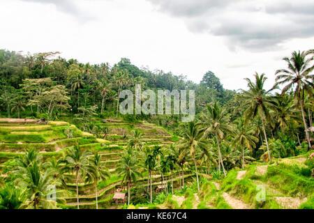 Tegallalang Rice Field, Bali - Stock Photo