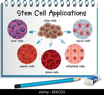 Diagram showing different stem cell applications illustration - Stock Photo