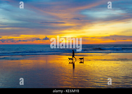 Silhouette of a man walking with the dogs on a beach at sunset. Bali island, Indonesia - Stock Photo