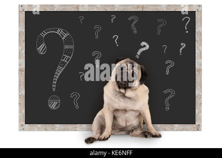 cute smart pug puppy dog sitting in front of  blackboard with chalk question marks, isolated on white background - Stock Photo