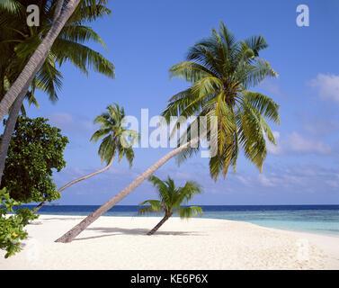Tropical beach, Kuda Bandos Island, Kaafu Atoll, Republic of Maldives - Stock Photo