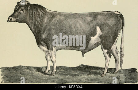 The diseases of live stock and their most efficient remedies   including horses, cattle, cows, sheep, swine, fowls, - Stock Photo