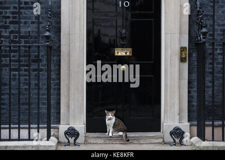London, UK. 10th October, 2017. Larry, the Chief Mouser of 10 Downing Street. - Stock Photo