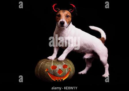 Cute dog in devils costume standing on Halloween pumpkin - Stock Photo