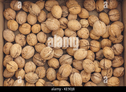 Fresh harvested walnuts in a box. Close up. - Stock Photo