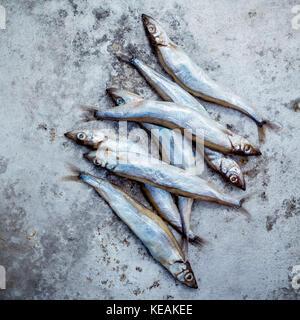 Fresh catch Shishamo fish fully eggs . Shishamo fish is popular fish for Japanese cuisine cooking Tempura. Fresh - Stock Photo