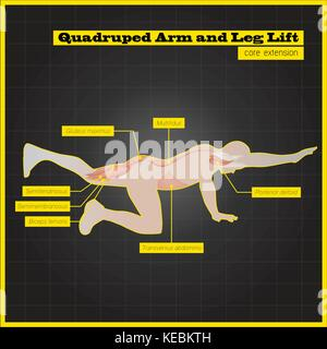 Antagonistic muscle exercises and Workouts - Stock Photo