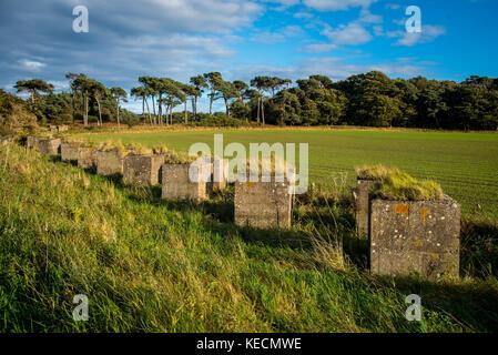 Walking on the John Muir Way between Dunbar and East Linton in Scotland - Stock Photo