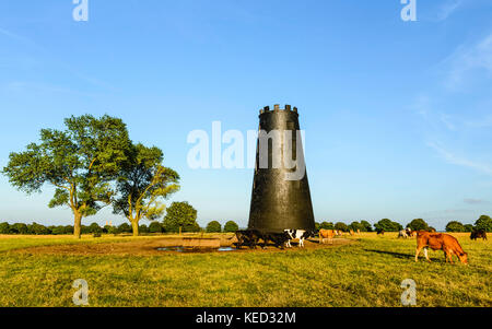 Disused windmill and trees on the Westwood open pasture on a fine summer evening at dusk in Beverley, Yorkshire, - Stock Photo
