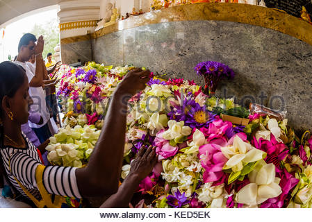 Prayer offerings, Sri Maha Bodhi, the sacred bodhi tree. Anuradhapura, North Central, Sri Lanka - Stock Photo