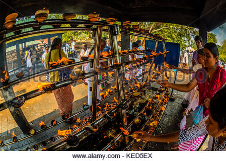 Sri Maha Bodhi, the sacred bodhi tree. Anuradhapura, North Central, Sri Lanka - Stock Photo