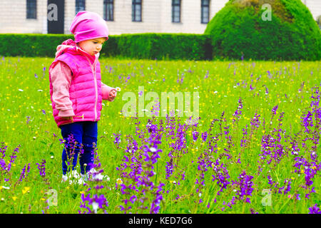 child pick purple flowers baby girl - Stock Photo
