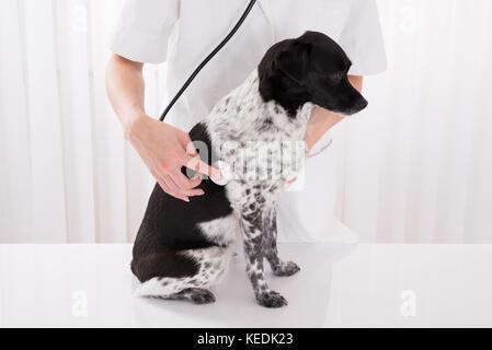 Close-up Of Vet Examining Dog With Stethoscope In Hospital - Stock Photo