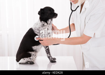 Close-up Of Vet Examining Dog With Stethoscope In Hospital - Stock Photo