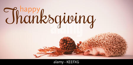 Digital generated image of thanksgiving greeting against hedgehog on white background - Stock Photo