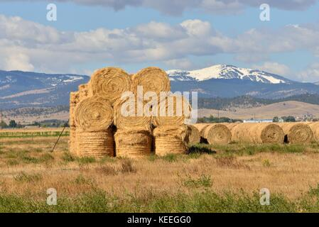 Round Hay Bales in fallow pasture - Stock Photo
