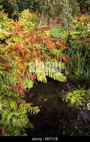 Savill Garden, Englefield Green, UK. 20th Oct, 2017. Autumn colour at Savill Garden in Windsor Great Park. Credit: - Stock Photo